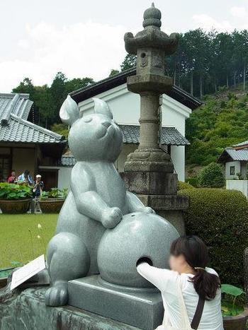 """本堂前の愛らしい「狛兎」は、パワースポットの中でも特に人気の石像です。  兎が抱いている玉の中には卵型の石が入っており、腕を差し入れてその石を立てることが出来れば""""運気上昇""""、""""足腰健全""""になると云われています。"""
