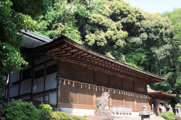 一間社流造が3棟並ぶ本殿は、平安中期の建造(1060年代)で、日本最古の神社建築です。左殿に、*菟道稚郎子命(うじのわきいらつこのみこと)、中殿に応神天皇、右殿に仁徳天皇が祀られています。鎌倉期建造の拝殿とともに国宝に指定されています。【画像は、「宇治上神社」本殿。】