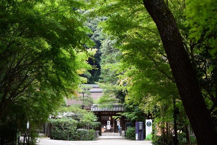 """「宇治神社」は、先の「宇治上神社」の下側、宇治川沿いにある古社で、応神天皇の菟道稚郎子である邸宅跡に建立された神社と伝わります。  この古社は、かつては""""宇治離宮明神""""と称され、「宇治上神社」を上社、この「宇治神社」を下社としていました。明治に入り社が分離し、「宇治上神社」と「宇治神社」の二社となりました。鎌倉期建造の本殿は、三間社流造。菟道稚郎子命坐像が安置されています。"""