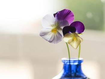 一日一日を丁寧に。 暮らしを整えていくと、自然と心も整ってきます。 小さな幸せを見逃さず、毎日を楽しんで過ごしていきたいですね。