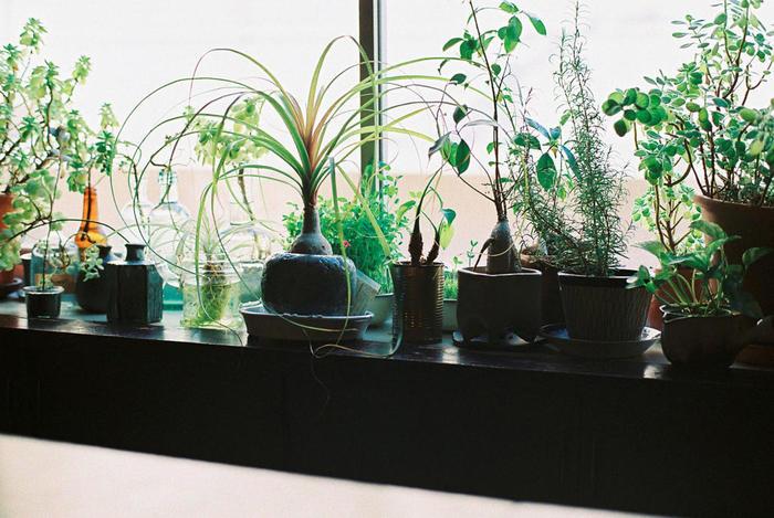 """""""緑""""が室内にあるだけで、心安らぎ、爽やかな気分になります。室内に緑を取り入れるだけで、人はストレスを軽減できるとも、生活に快適性や満足感を得ることができるともいわれているんです。"""
