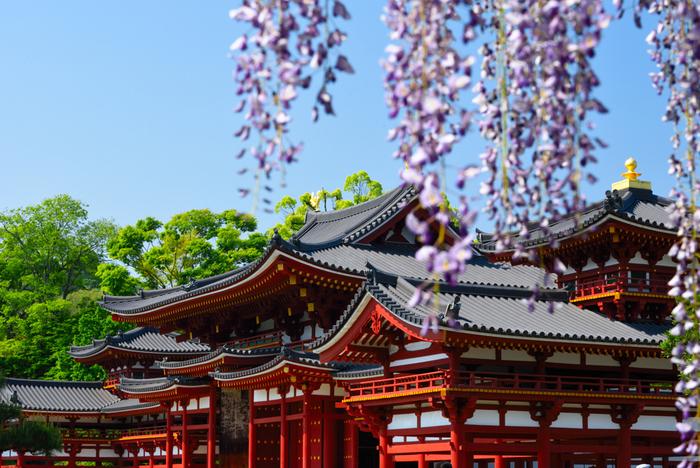 平等院には見事な藤棚もあります。5月にはその美しい藤と朱塗りの鳳凰堂を同時に楽しむことができます。