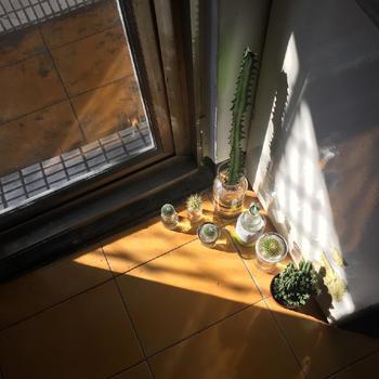 """室内のコーナー、特に窓際の隅は、明るさを確保するために家具を配置できず、デッドスペースになってしまうものです。特にマンション等のRC造の建物では、構造上開口部の脇に柱が通るため、画像のような家具の置きづらい空間が生じます。  観葉植物をまとめて置けば、空間を有効活用でき、""""緑""""も窓から差し込む光に輝き、目に鮮やかに映ります。  この例ではサボテンを中心に置いていますが、床に直置きする場合は、鉢の高さを違えて置くと配置しやすく、見た目も感じ良くまとまります。中心となる背の高い鉢を中心に据えると、コーディネートが楽です。"""