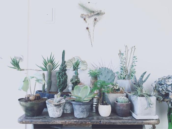 """同じ高さの鉢を並べた""""アーティスティックな植物園""""。  鉢と一緒に、お気に入りのオブジェ、雑貨や絵画を共に並べれば、より芸術的な雰囲気に。"""