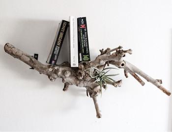 流木の個性的な形を活かして本棚に。形のいい流木に出会ったら、ぜひ真似したいアイデアですね!