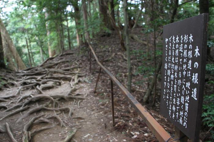 このエリアは木の根道と呼ばれています。 地中に根を張れずに地上に見えており、力強い根の様子が、なんとも神秘的ですね。