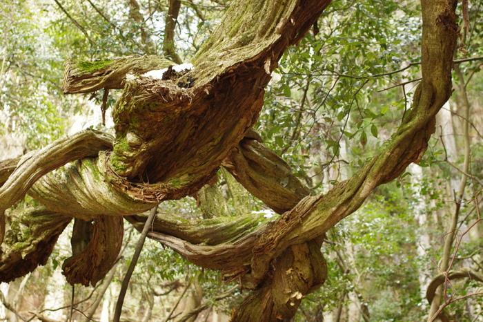 自然のエネルギーが満ち溢れているといわれ、パワースポットとして知られているだけのことはあり、不思議な形の植物にも巡りあいます。