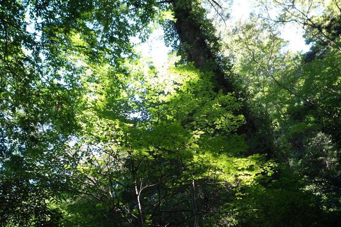 自然のパワーに癒される、森林浴コースです。