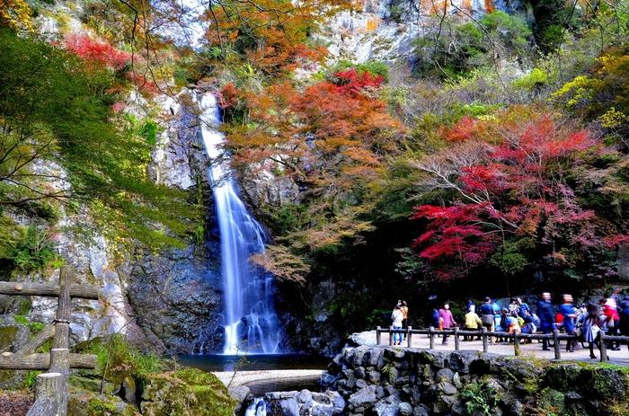 この滝が見たくて、箕面山を目指しますとの声が多いです。