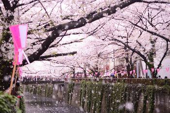 目黒川沿いはもちろんのこと、桜の咲く道や公園が多いことも五反田の特徴です。 五反田散策がてら美味しい物を求めて出かけてみませんか?