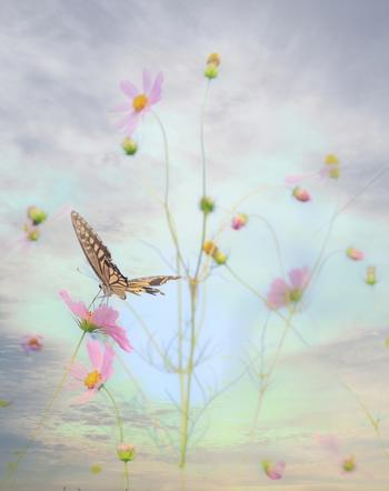 こちらはぼかした空と、蝶という異なる写真を1枚に重ねて写したそうです。 幻想的で、いつもと全く違う雰囲気の写真ですね。