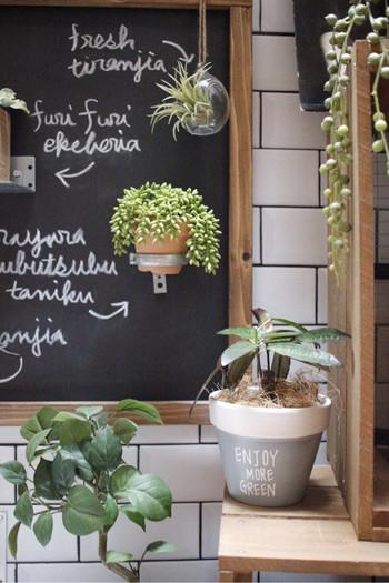 右下の鉢はリアルグリーン。周りのフェイクと組み合わせてグリーンコーナーに。混ぜて飾っておいても違和感がなく、とってもおしゃれです。