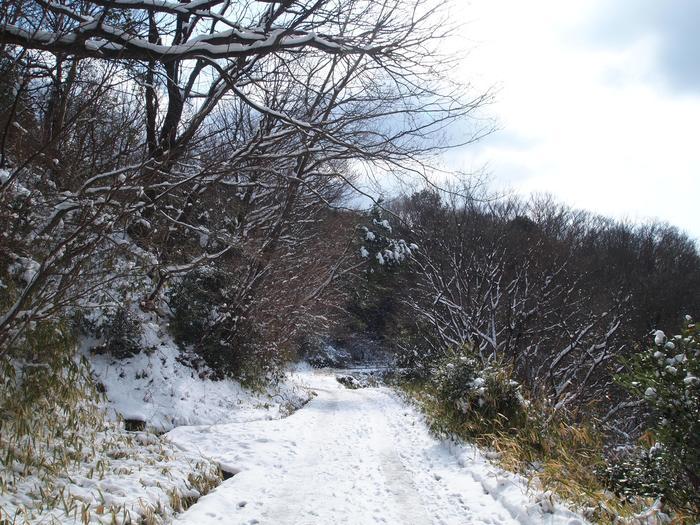冬になると雪が積もります。 木々が白くなり、静かに冷たい風が吹いてくる中で考え事をするのもいいそうです。