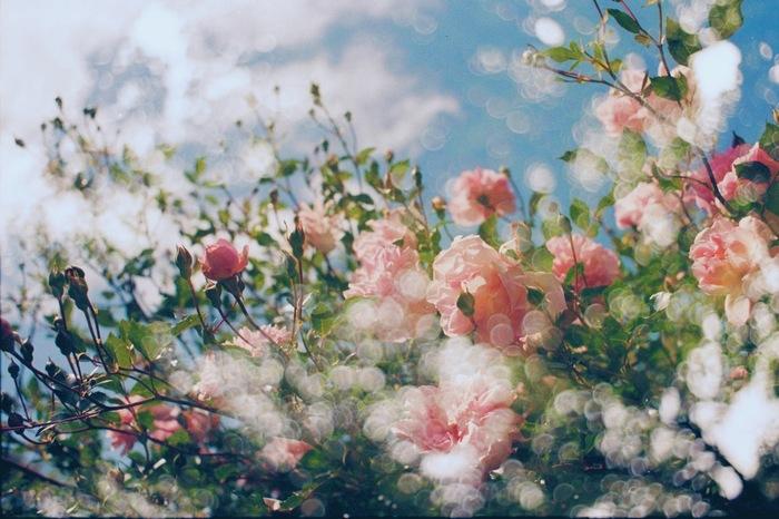幻想的な作品。こんな風に美しい写真が撮れたら、カメラの世界がもっと広がりそうです。