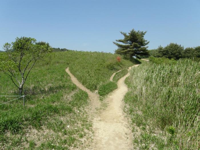 ある程度登ると、道は平たんになります。 ここまで来ると空の広いこと!