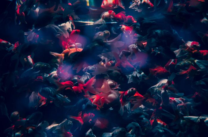 金魚を多重露光し、幻想的な群れに。同じモチーフを重ねるのも面白いかもしれません。