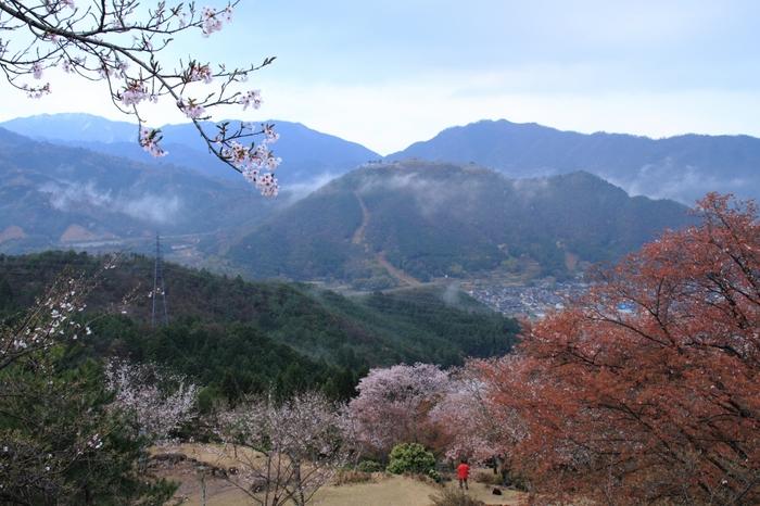 山頂までに展望台が第1~3まであるので、各展望台で景色を見ながら一息ついて、また山頂を目指しましょう!