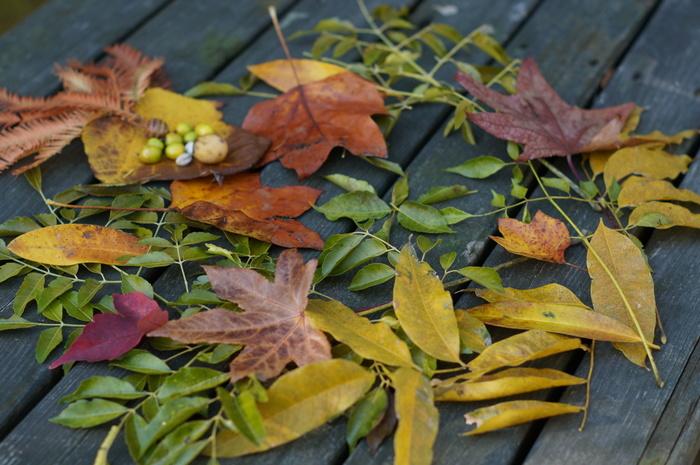 まずは、モスグリーン、カーキ、ブラウン、ワインレッド、マスタードなど秋色のパンツで季節感を取り入れましょう。今期トレンドのテラコッタカラーもおすすめですよ。