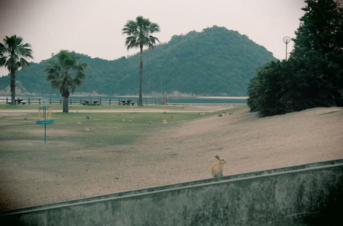 「うさぎの楽園」こと、大久島は、竹原市忠海港から3キロメートル沖合の瀬戸内海に浮かぶ小島です。周囲約4.3キロメートルの大久野島での散策は、徒歩かレンタサイクルがおすすめです。