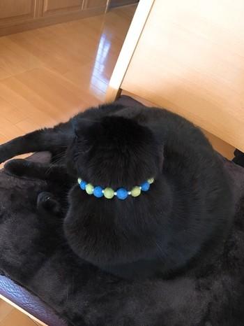 こちらは猫ちゃんの首飾り♪ よく似合ってます。