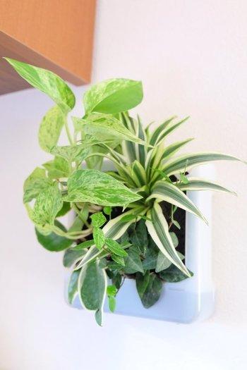 壁にかけられる観葉植物のシリーズは、植えられた植物の組み合わせの種類も豊富です。省スペースでフレッシュグリーンを楽しめるとあって、リビングやキッチン、洗面所などいろいろな場所で活躍しています。