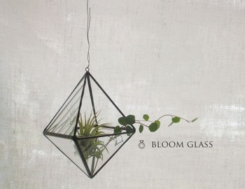土のいらないエアプランツは、ガラスのテラリウムに入れるとおしゃれ。幾何学的なデザインと植物の曲線が好相性。