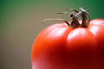 プチトマトに限らず普通のトマトでも、セミドライトマトを作ることが出来ます。  フルーツトマトのような味の濃いトマトがオススメです。  作り方は、トマトをスライスし、後はミニトマトと同じ要領で乾燥させて、瓶に詰めてオリーブオイルを注いで完成です。この時、種を抜いても構いません。種を抜くと、早く乾きます。