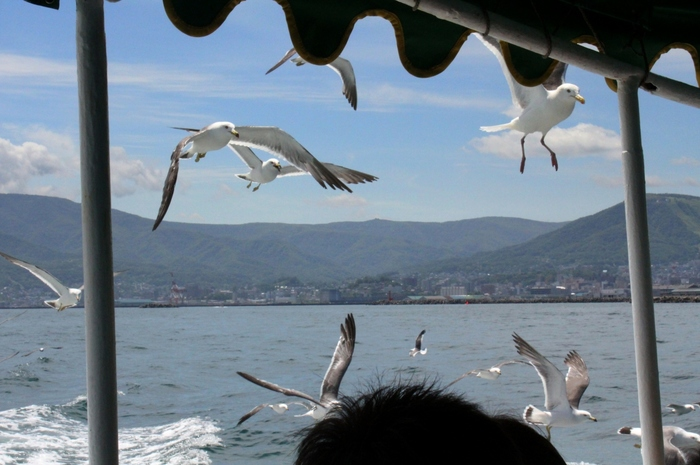 小樽市内から祝津方面へ向かうもう一つの方法は、「船」。観光船「あおばと」で海上の旅を楽しみながら水族館へ。たくさんのウミネコたちと一緒に海原を疾走するなんて、めったにない体験ですよね。