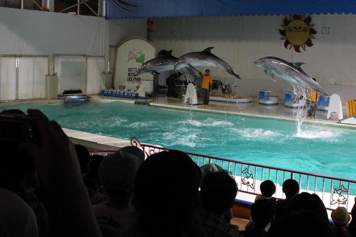 1958年(昭和33年)、「北海道博覧会」の会場のひとつとして誕生したおたる水族館。「設備が古い」なんて声もありますが、それでもやっぱり愛される施設であり続けるのは、この水族館が、目の前の海と一体化した「自然」を感じる水族館だから。館内には北方の海をイメージしたダイナミックな大水槽があり、海に直結する屋外展示では迫力あるトドショーが見られます。そして、しっかり訓練された「イルカショー」と並ぶ最近の人気は「やる気のないペンギンショー」。飼育員さんの言うことを聞かない「自由すぎるペンギン」たち、眺めていると、和むんです。