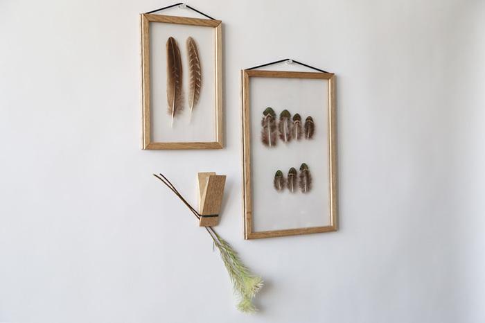 標本のように額縁に入れて鳥の羽根を飾ります。欧米の古いカントリー調のおうちには、よく飾られていたアイテムのようです。
