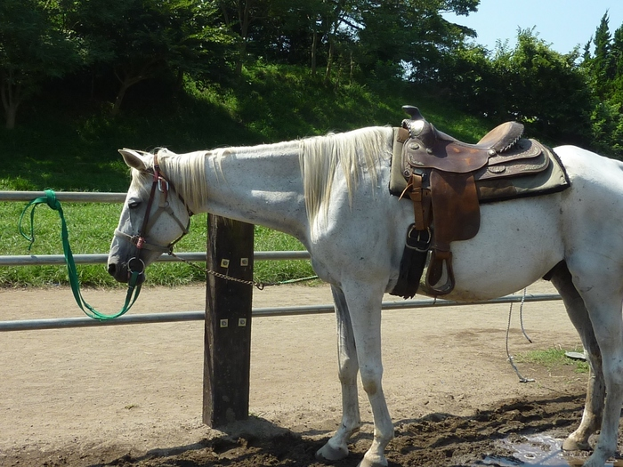 もちろん乗馬体験も♪初めての方やお子様も楽しめます。 訪れる前に、乗馬体験を実施しているかどうか、事前にお問い合わせしてみてくださいね。