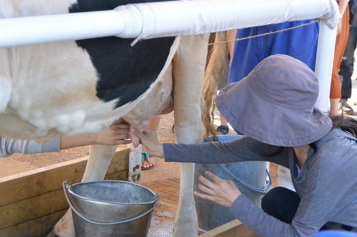 乳搾りも体験できちゃいます!