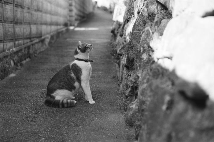 石垣をじっと見つめる猫。何を考えているのでしょう?日常をモノクロで切り取ると、違う世界がみえます。(LeicaM6)