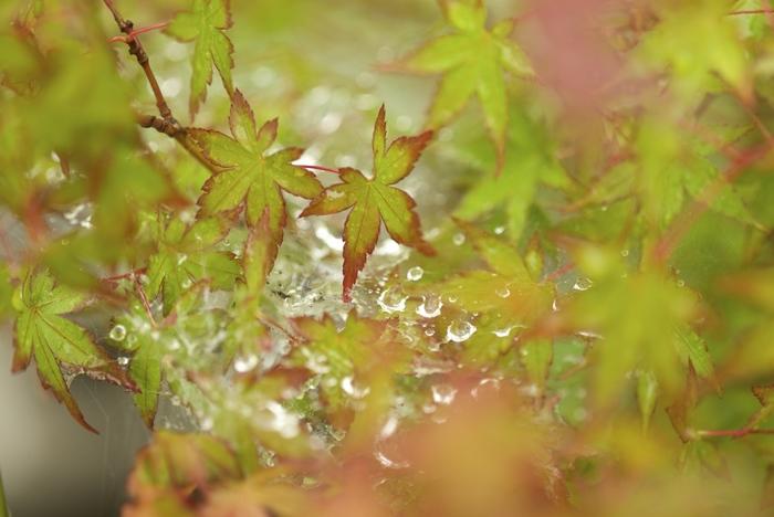 朝露に濡れる、蜘蛛の巣はちょっぴり不思議な形。こんな美しい瞬間が見られるのなら、雨の日だって楽しくなっちゃいそうですね♪(Leica M240)