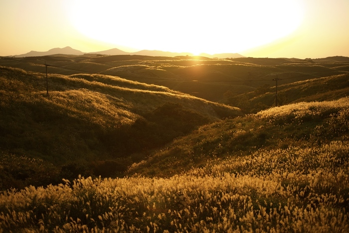 夕日に照らされて黄金色に輝く、ススキの風景。果てしなく広がる、雄大な自然を感じることができる作品です。(Leica M240)