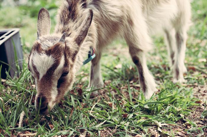 もふもふ動物たちの姿は、見ているだけで癒されます。他にも、乗馬体験や、ウサギのふれあい体験など、ふれあいイベントが盛りだくさんです。