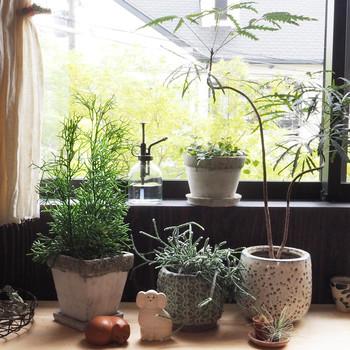 """腰高窓に備え付けられたカウンターや収納棚の上は、観葉植物をまとめて飾るのに最適な場所かもしれません。  置く場合は、小さい鉢から中程度の鉢の観葉植物にしましょう。  植え込む""""鉢""""の色や材質は、インテリアの雰囲気を左右しますので、よく検討しましょう。"""