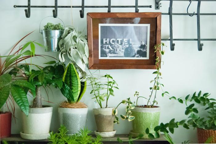 先述したように、背の高い植物を中心にして、高さの違うものを様々に置くと、コーディネートがしやすいものです。  この例では、左奥が中心となる鉢です。右に行くにしたがい、ボリュームが小さくなるようまとめています。  この例が秀逸なのは、空間のバランスの取り方。小さな観葉植物の上部に、額を飾り、左側のボリュームあるグリーンとバランスをとっています。  鉢を並べて、上部の空間を殺風景に感じるのなら、絵画やお気に入りのオブジェで飾ってみましょう。