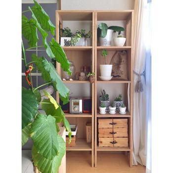 """お部屋の一角。  本棚などに観葉植物を飾れば、たとえ少ない鉢数でも、異なる高さに配置されることで""""緑""""が沢山あるように感じられます。  また、市販のプランター棚と異なって、他のものと一緒に飾り付けしやすく、雰囲気良くまとめることが出来ます。"""