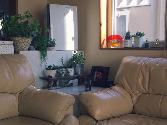 ソファやサイドボード等の脇も、植物をまとめて置くのにうってつけのデットスペースです。  同じ種類の植物を集中させて置けば、雰囲気良く簡単にまとまります。
