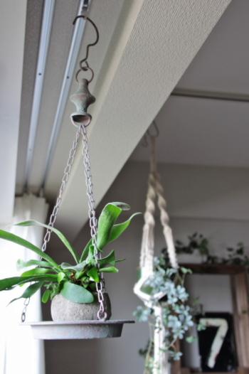 トレーにチェーンをつけて、安定してポットを置けるようにしています。  自然素材の鉢が使われているので、植物そのもののイメージを壊しません。