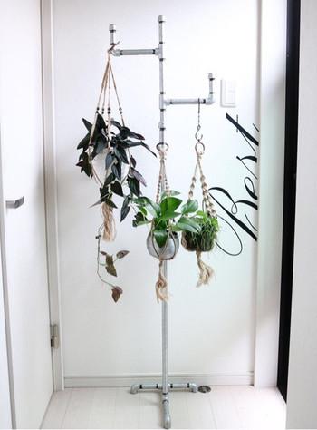 ハンガーラックに植物を。  フックを付けて、グリーンの高さを細かく調整しています。