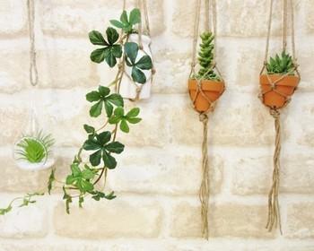 シンプルな壁を飾るのに、ハンギングプランツは最適。  鉢や植物を変えることで、動きが出ます。