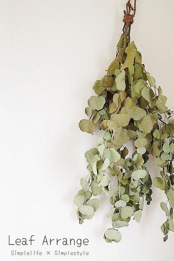 束ねて吊るすだけの、簡単なのにおしゃれなスワッグの材料としても人気です。フレッシュなユーカリで作れば、吊るしているうちにドライになり、雰囲気を変えながら長く楽しむことができます。