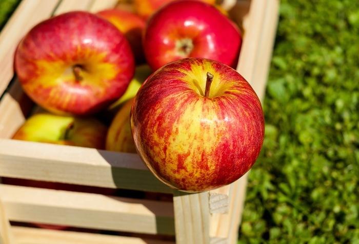突然ですが、皆さんは1日にどのくらいの果物を食べていますか?農林水産省が中心となって推進している運動に、「毎日くだもの200グラム運動」というものがあります。バランスの良い食生活のためには、1日200グラムの果物を摂取するのが望ましいということなんです。