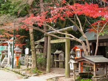 散策を楽しむために、まずは腹ごしらえ♪ ランチで栄養を補給してから、紅葉の名所「八坂神社」へ向かいましょう!