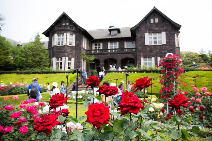 毎年、秋に行われる「バラフェスティバル」は大人気!約90種180株のバラが楽しめます。