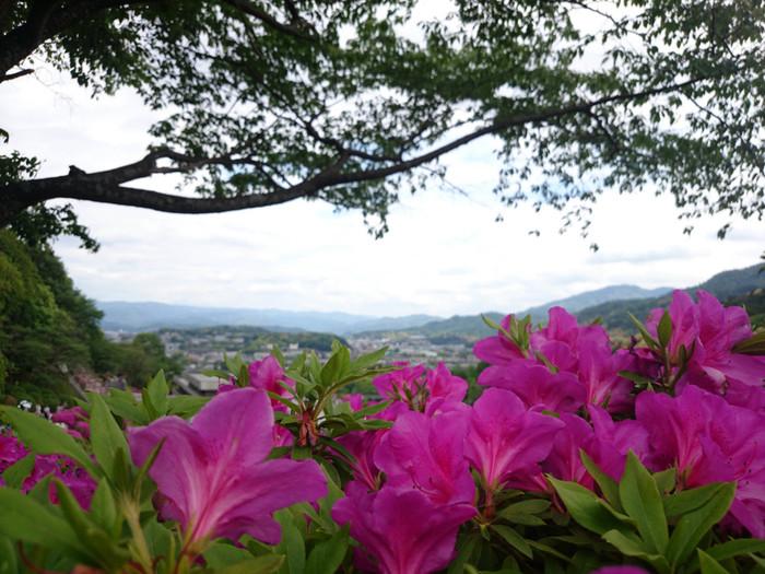 高台に位置する蹴上浄水場からは、京都盆地を一望することができます。