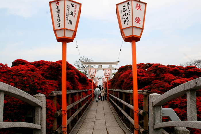 両横にツツジの木が延々と並ぶ八条ヶ池の中央通路を歩いていると、まるで赤いトンネルの中を通り抜けるような気分を覚えます。