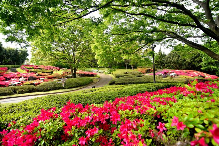 大阪府富田林市にある錦織公園は、大阪みどりの100選にも選定されている都市公園です。毎年5月頃になると、公園内に植えられたツツジが見ごろを迎えます。